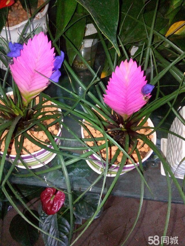花卉盆栽出租出售