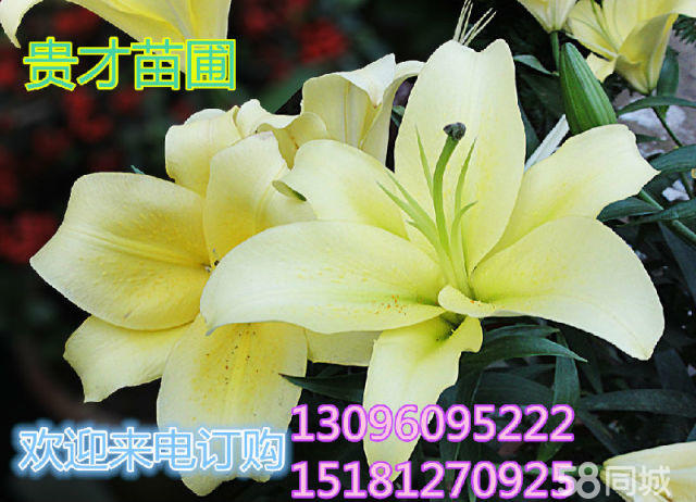 贵才苗圃—批发零售各种花卉、树苗