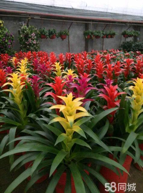 咸阳绿植花卉注册公司,承接大小型绿植销售租摆业务