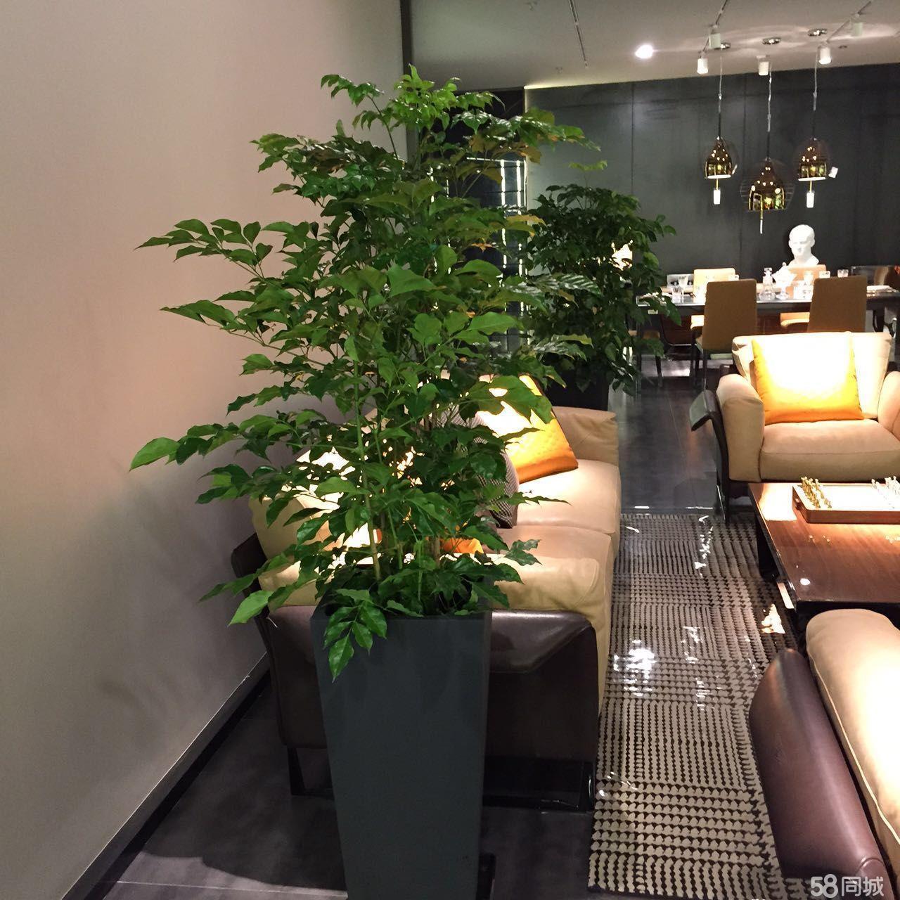 珠海专业室内绿植租摆,花卉销售,绿化养护,园林工程
